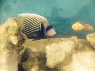 大きい魚さん.JPG